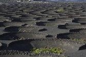 Volcanic wine area La Geria — Stock Photo