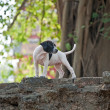 Baby dogs in temple areWat PhrSi Sanphet — Stock Photo #5530050