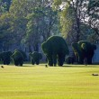 Bushes cut to animal figures in the park of Bang Pa-In Palace — Stock Photo #5530598