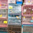 Birds in a cage at the birds market in Hongkong - Stock Photo