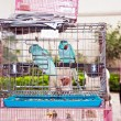 Birds in a cage at the birds market in Hongkong — Stock Photo