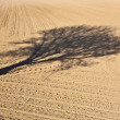 Shadow of a tree in the field - Stock Photo