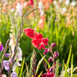 Beautiful flowers in the meadow — Stock Photo #5535716