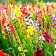 Beautiful flowers in the meadow — ストック写真