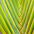 Details of palm leaves give harmonic structure — Stock Photo #5536250