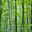 Trunks in forest — Stock Photo