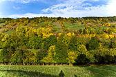 丘と美しい谷間の草地 — ストック写真
