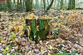 Folhas de carvalho na floresta — Foto Stock