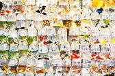 Barevné tropické ryby v plastových roman na prodej — Stock fotografie