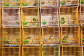 Birds in a cage at the birds market in Hongkong — Stok fotoğraf