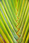 Details of palm leaves give a harmonic structure — Stock Photo