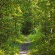 Forest Trail with sunbeams — Stock Photo