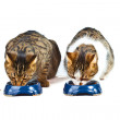 Two cats have their meal — Foto Stock