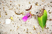 Beautiful structured leaves at the beach arranged by nature — Stock Photo