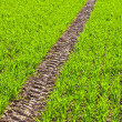Tire Path In Field — Stock Photo