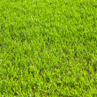Green field with growing plants — Stock Photo