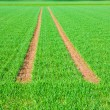 Tire Path In Field — Stock Photo #5616518