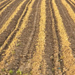 Background of newly plowed field - Stock Photo