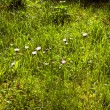 Grass in wonderful morning light — Stock Photo