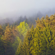 Stock Photo: Morning fog in forest with sunbeam