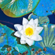 White lotus water lily in lake — Stock Photo