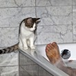 Royalty-Free Stock Photo: Feet of man bathing and cat strolling around the bath tube
