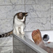 Feet of man bathing and cat strolling around the bath tube — Stock Photo