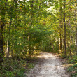 Path in forest with beautiful trees — Stock Photo #5618835
