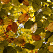 Composition of oak leaves - Foto Stock