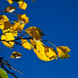 Oak leaves in harmony - Foto de Stock  