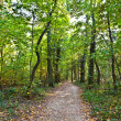 Path through old oak forest — Stock Photo