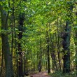 Path through old oak forest - Foto Stock