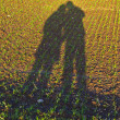 Freshly growing plants on acre with shadow of couple — Stock Photo