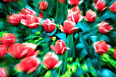 Tulips in the garden with extreme zoom in expressionistic light — Stock Photo