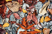 Beautiful structured leaves at the beach arranged by nature in a — Stock Photo