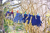 Gloves on a line for drying — Stock Photo