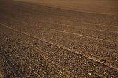 Campo recém arado na bela luz — Foto Stock
