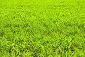 Campo verde con plantas — Foto de Stock