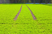 Tire Path In Field — Stock Photo