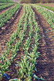 Background of newly plowed field — Stock Photo