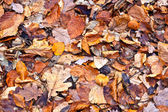 Autumn leaves of trees in forest — Stock Photo