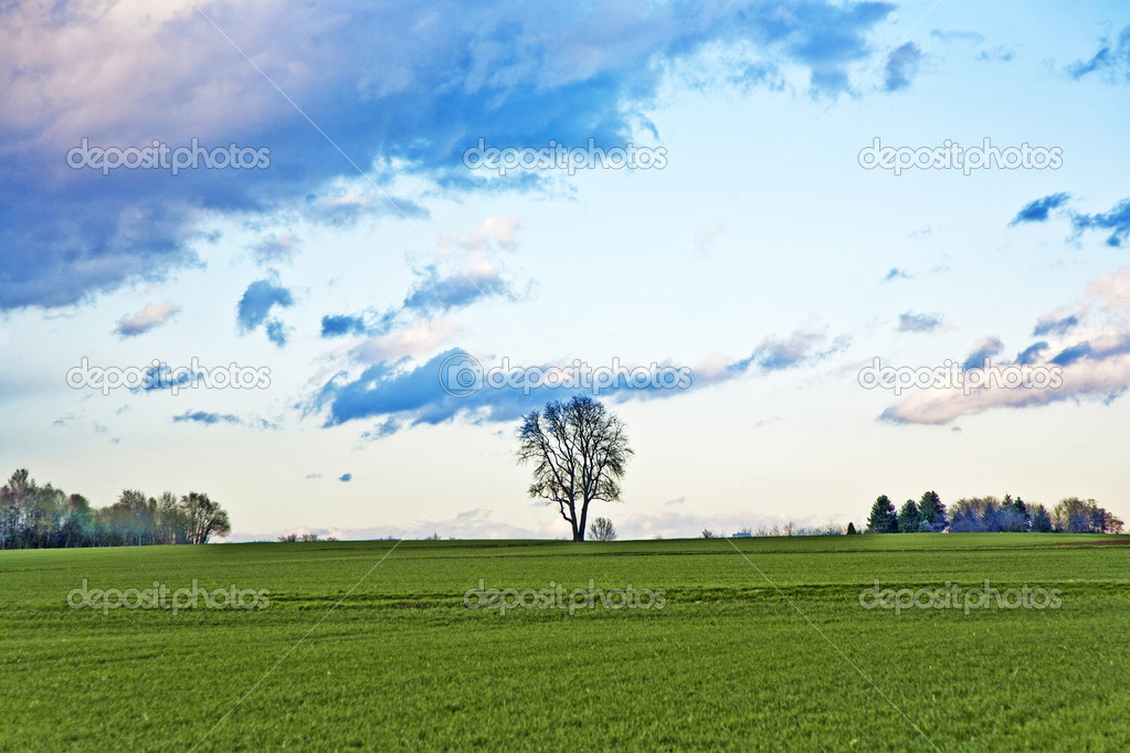 Landscape with acres,trees and dark clouds at the sky — Stock Photo #5616344
