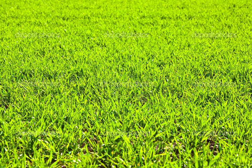 Green field with growing plants in springtime — Stock Photo #5616489