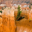 Navajo Loop Trail - Wall Street: Bryce Canyon National Park - Stock Photo