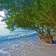 Tropical beach with trees in the water — Stock Photo #5637694