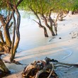 Tropical beach with trees in the water — Stock Photo #5637702