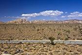 Street throught Joshua tree national park — Stock Photo