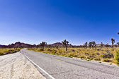Street thru Joshua tree national park — Stock Photo