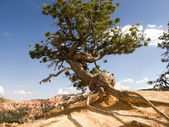 Beautiful landscape in Bryce Canyon with magnificent Stone forma — Stock Photo