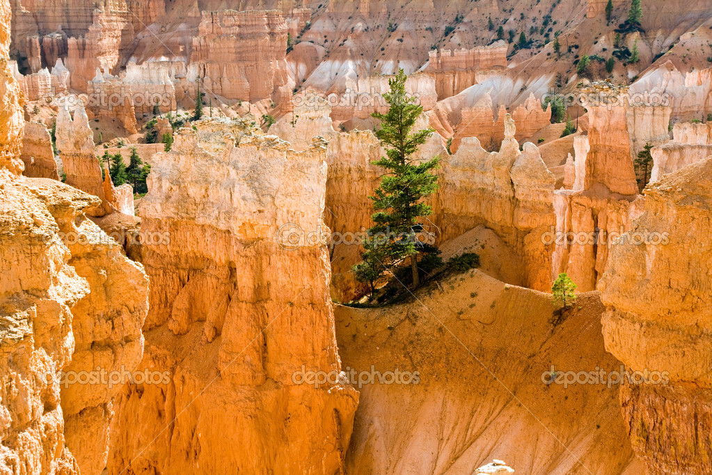 Navajo Loop Trail - Wall Street: Bryce Canyon National Park, Utah — Stock Photo #5636294